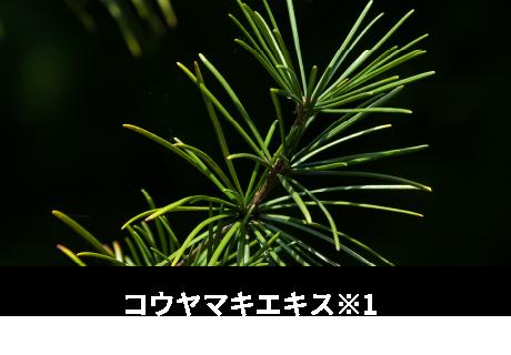 コウヤマキエキス